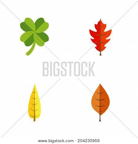 Flat Icon Maple Set Of Foliage, Maple, Frond And Other Vector Objects