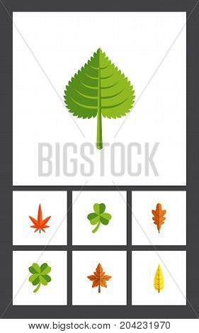 Flat Icon Leaves Set Of Linden, Leafage, Hickory And Other Vector Objects