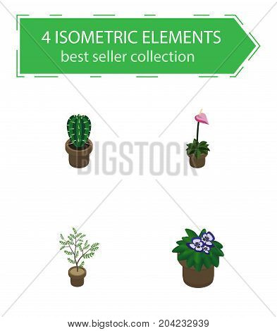 Isometric Plant Set Of Fern, Flowerpot, Grower And Other Vector Objects