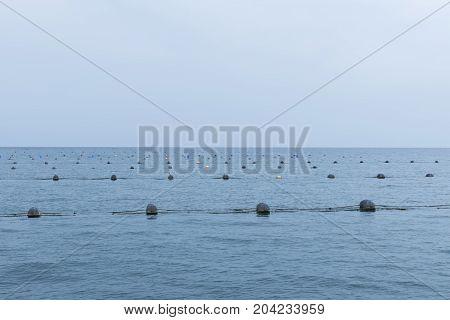 Buoys Mussels Farm Sea Food Water Seafood