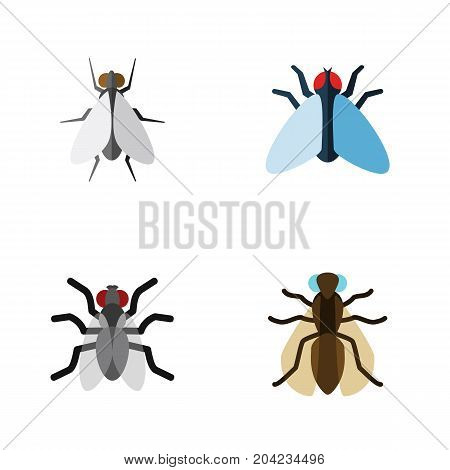 Flat Icon Housefly Set Of Mosquito, Housefly, Gnat And Other Vector Objects