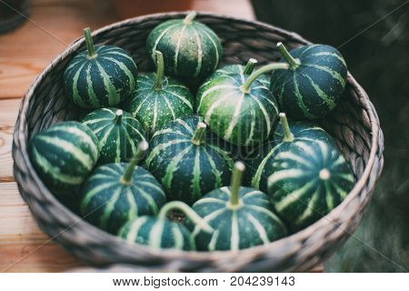 Braided basket full of fresh green decorative striped pumpkins just recently gathered for decorating Thanksgiving day on wooden table; shallow depth of field
