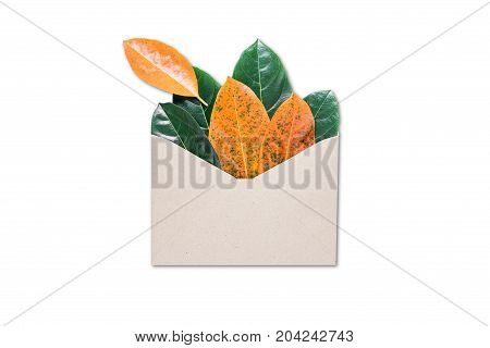autumn letter - an envelope and autumn leaf on white background
