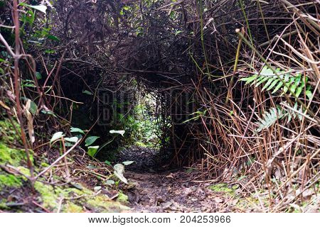 Unnegotiable Trekking Path Cut Down In The Jungles And Bushes
