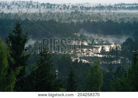 Morning fog lingers over bog. Aerial view