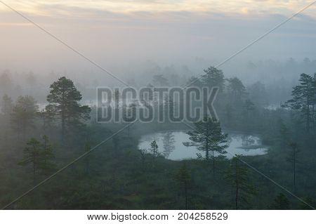Foggy morning over Konnu Suursoo bog Harju county Estonia