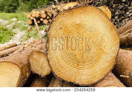 A cut wooden log with growth rings on a rick of wood