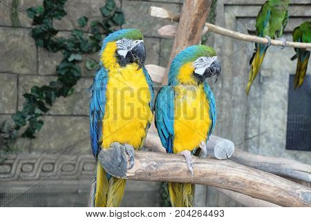 parrots on a stick, parrot, animal, bird macaw nature