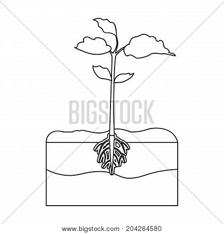Plants single icon in outline style.Plants, vector symbol stock illustration .