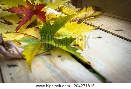 Autumn leaves in a fruit cassette. Close-up. Shallow depth of field.