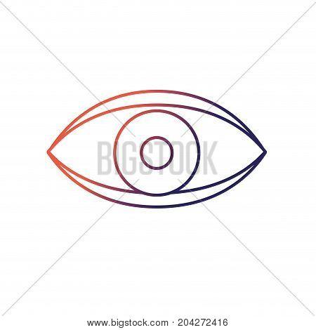 eye human anaomy to optical graphic vector illustration
