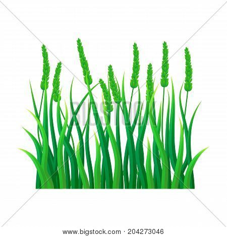 Green field grass icon. Realistic illustration of green field grass vector icon for web design isolated on white background