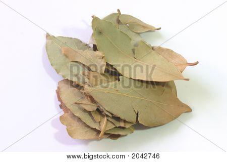 Dry Laurel Leaves