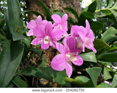 Bouquet of orchids on tree, Pink or purple flower