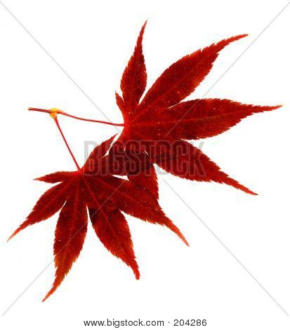 Leaf3