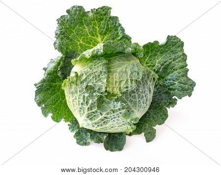 top view juicy head of savoy cabbage isolated on white