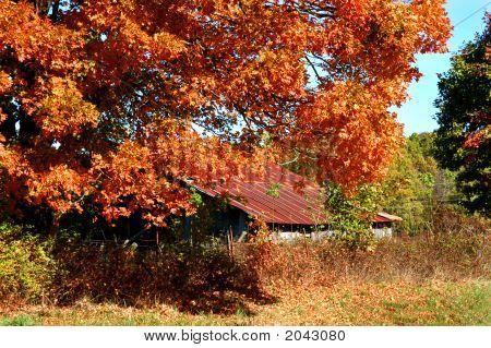 Orange And Rust Mix During Autumn