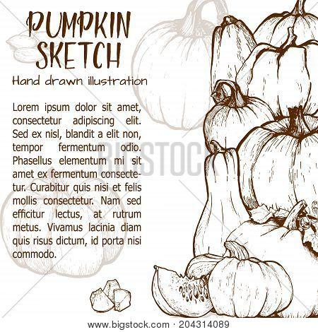 Pumpkin sketch hand drawn illustration. Vegetable engraved style illustration. Detailed vegetarian food sketch. Farm market product.