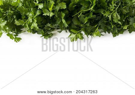 Background of parsley. Parsley at border of image with copy space for text. Top view. Ripe parsley close-up.