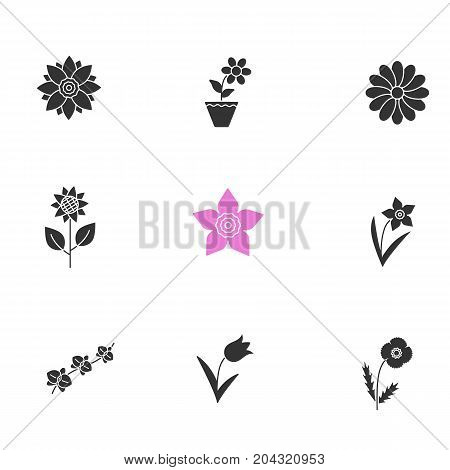 Flowers glyph icons set. Silhouette symbols. Lotus, crocus, chamomile, sunflower, daffodils, orchid branch, tulip, poppy. Vector isolated illustration
