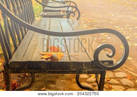 Fall background. Maple fall leaf on the wooden bench in the fall park in cloudy weather. Fall season in the city park - fall background in retro tones. Focus at the fall maple leaf. Fall nature