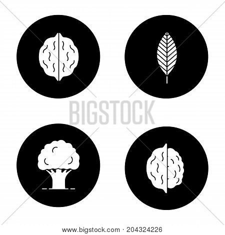 Forestry glyph icons set. Walnut leaf, oak tree, nuts. Vector white silhouettes illustrations in black circles