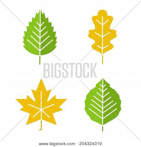 Leaves glyph color icon set. Poplar, birch, oak, maple leaves. Silhouette symbols on white backgrounds. Negative space. Vector illustrations