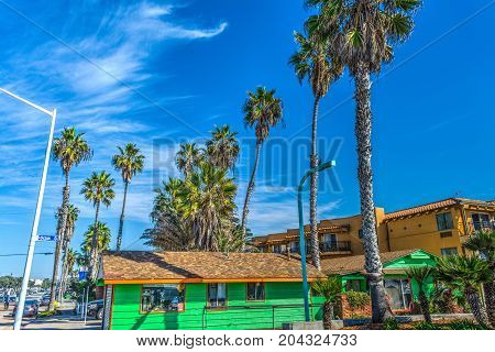 Palm trees in Pacific Beach in California