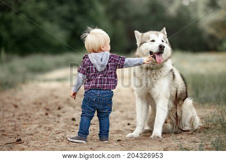 Little boy stands near malamute dog on walk along forest road and touches him tongue.