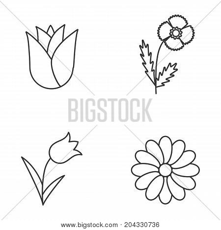 Flowers linear icons set. Rosebud, poppy, tulip, chamomile. Thin line contour symbols. Isolated vector outline illustrations