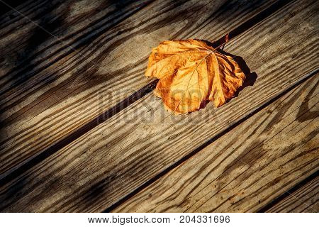 A single leaf laying on a wooden deck the end of summer is near in Occoquan Virginia.