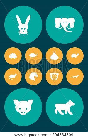 Collection Of Mouse, Ape, Steed And Other Elements.  Set Of 12 Animal Icons Set.