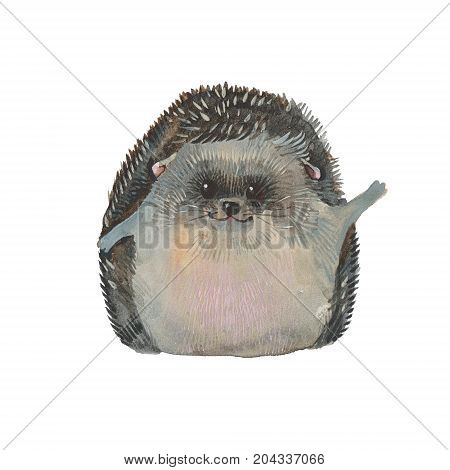 cute hedgehog, watercolor illustration  on white background
