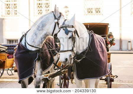 Horses with wagons in winter on the main square of Salzburg in Austria. Entertainment of tourists, riding. Attractions.