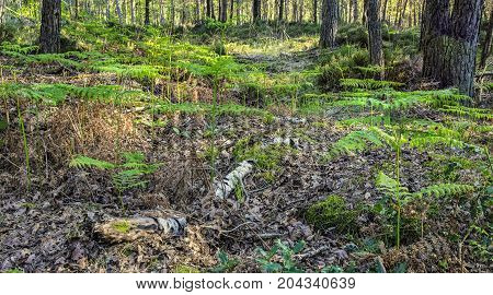 Image of a fresh forest in spring with new beautiful green ferns.