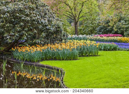 Blooming flowers in a garden in spring.