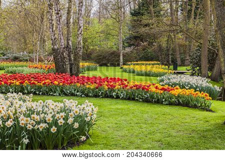 Blooming flowers in a garden in spring