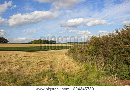 Farm Land With Maize Crop