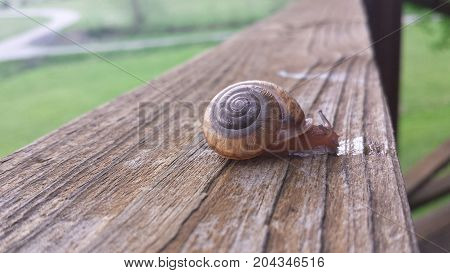 Snail on a rail on a country road