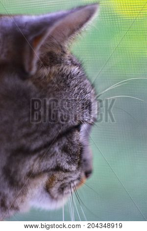 Cat looking out the window green background close-up shallow depth of field vertical frame.