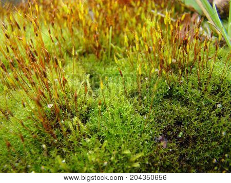 Green moss at approach is similar to a mysterious fluffy forest.