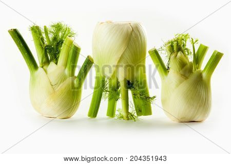 fennel isolated on white background studio photo