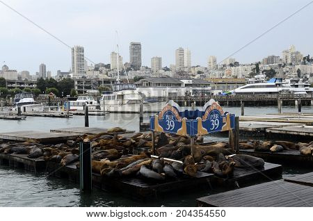 San Francisco Pier 39 view of buildings and sea lions USA
