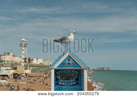 24 of August, 2017, Editorial photo of Brighton Pier and beach and seagull, Brighton, UK, Great Britain, England