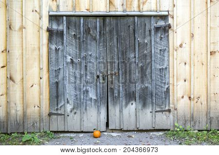 Old And Weathered Rustic Barn Doors With Rusty Lock, Small Pumpkin On Ground Outside