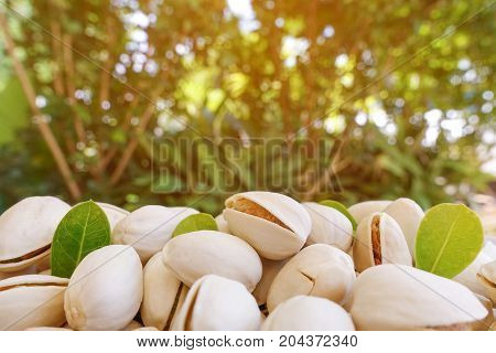 Pistachios with green leaf and nature background - closeup