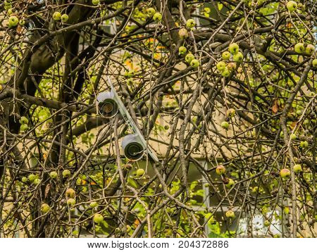 Old white skateboard speaker broken and abandoned in branches of tree
