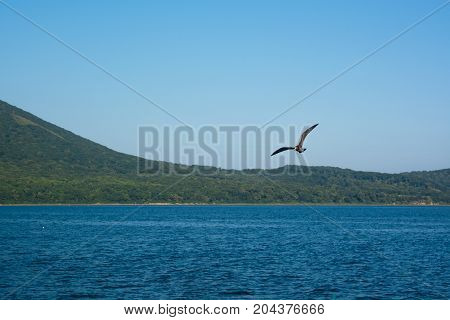 Cormorant flying over sea. Sea shore with green hills.