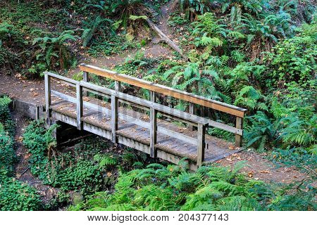 Wooden Bridge. Purisima Creek Redwoods Open Space Preserve, San Mateo County, California, USA.