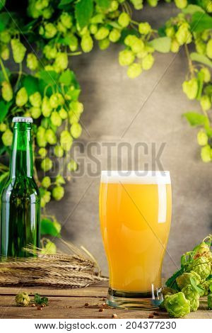 Pint of beer on gray wooden wall with hops.
